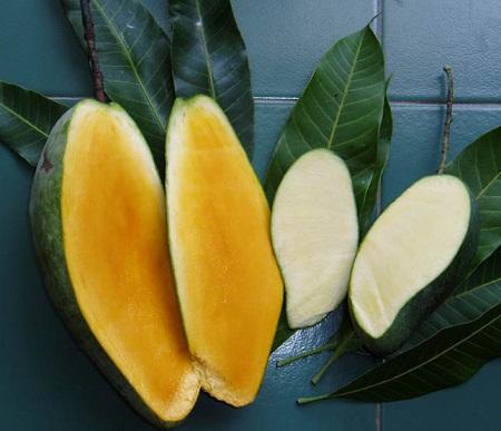 khasiat manfaat kulit buah delima tanaman obat tradisional
