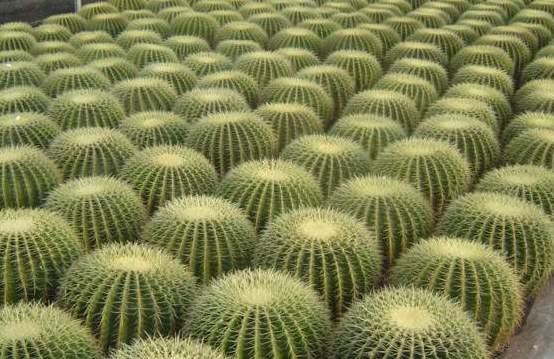 Um jardim para cuidar poupe gua escolha plantas - Plantas exteriores resistentes al sol ...