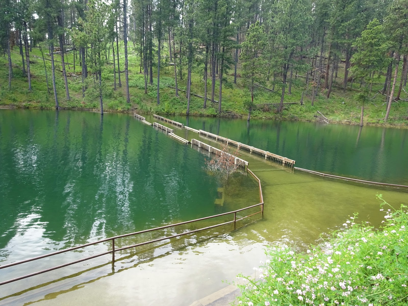 Metamorphosis road another glorious week in the black hills for Pactola lake cabins