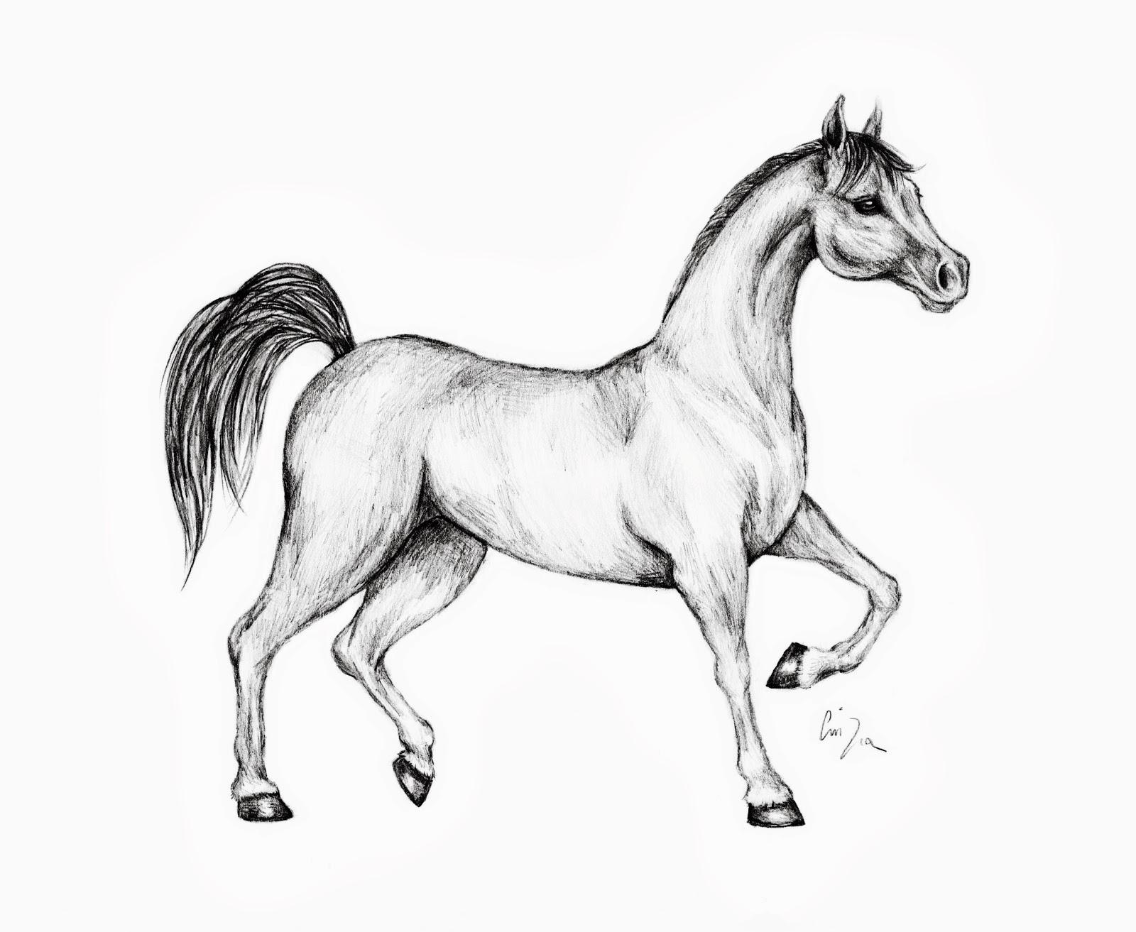 Disegni da colorare di cavalli for Immagini di cavalli da colorare
