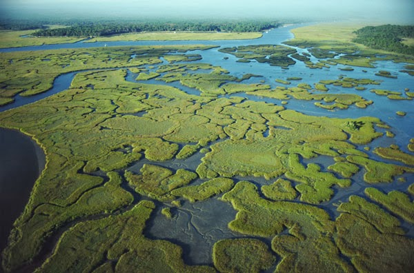 an analysis of the wildlife and ecosystem in the everglades Assessment of ecosystem as usace leadership, have asked for such an assessment of everglades restoration benefit-cost analysis the process of ecosystem service valuation national research council, valuing ecosystem services.