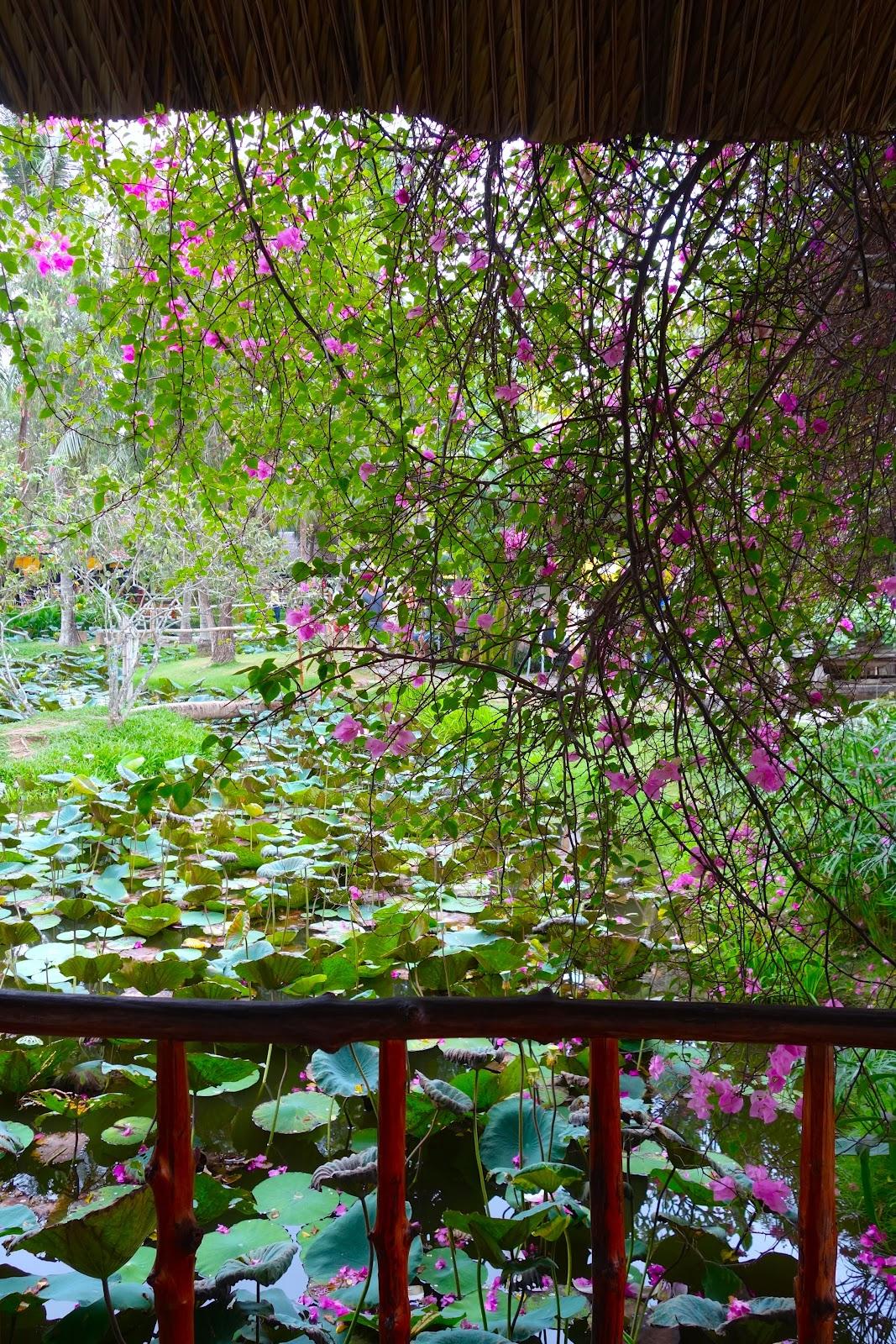 lotus pond Vietnam 2015