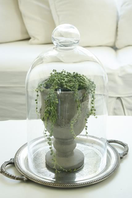 Lush interiors dekorieren mit glasglocken - Glasglocke dekorieren ...