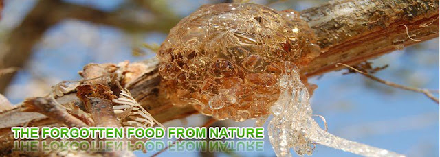 Gum Arabic  - Manna Arab - Second  Chance To Health