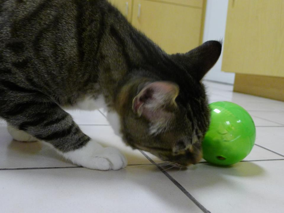 how to entertain a bored cat