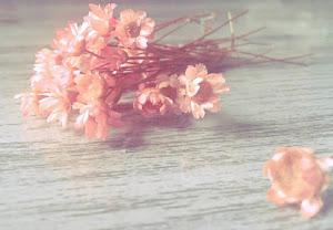 """""""Vejo flores em você..."""""""