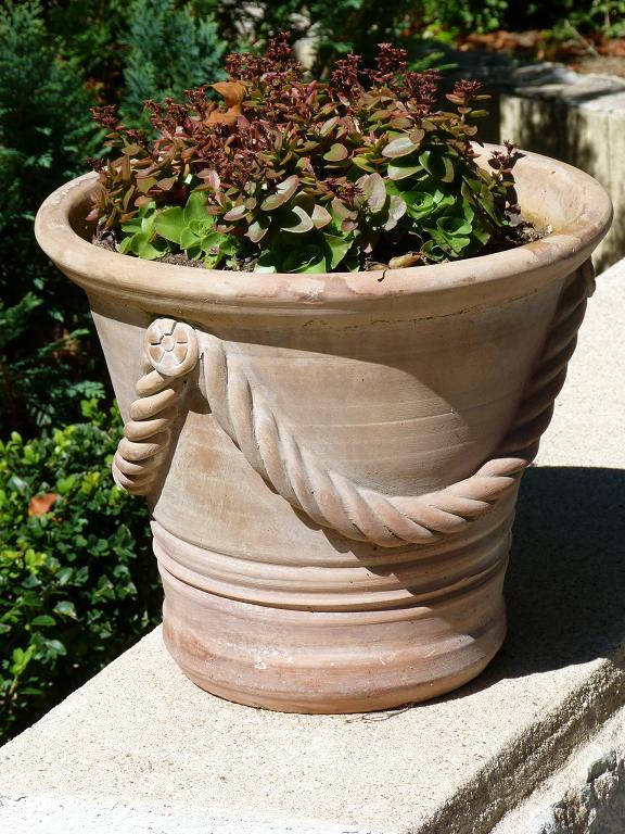 les pins noirs vivaces ou succulentes en pots ou comment jardiner facile. Black Bedroom Furniture Sets. Home Design Ideas