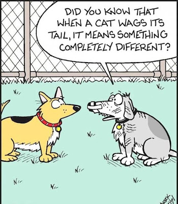 Funny dog cat tail wag cartoon picture image joke did you know that