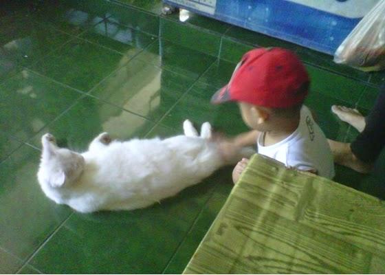 +Gambar foto anak sedang bermain dengan kucing anggora putih mulus