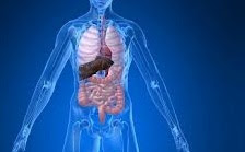 5 Cara Mudah Keluarkan Racun Dari Dalam Tubuh