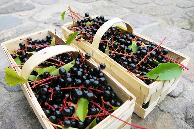 Owoce jesieni: czeremcha ♥