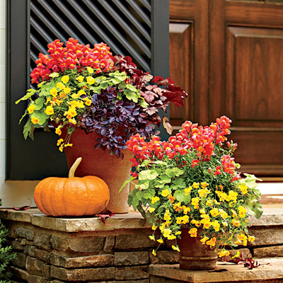5 Must Have Fall Container Gardens