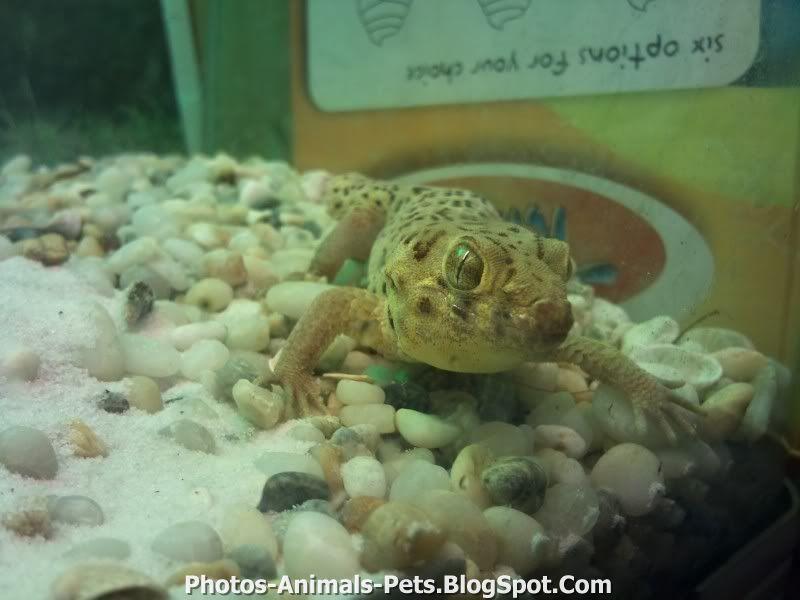 http://2.bp.blogspot.com/-eEuSPhyr7CE/TxWPTyRvVWI/AAAAAAAAC7g/tSpLivtaBf8/s1600/geckos.jpg