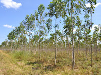 Typical Silviculture