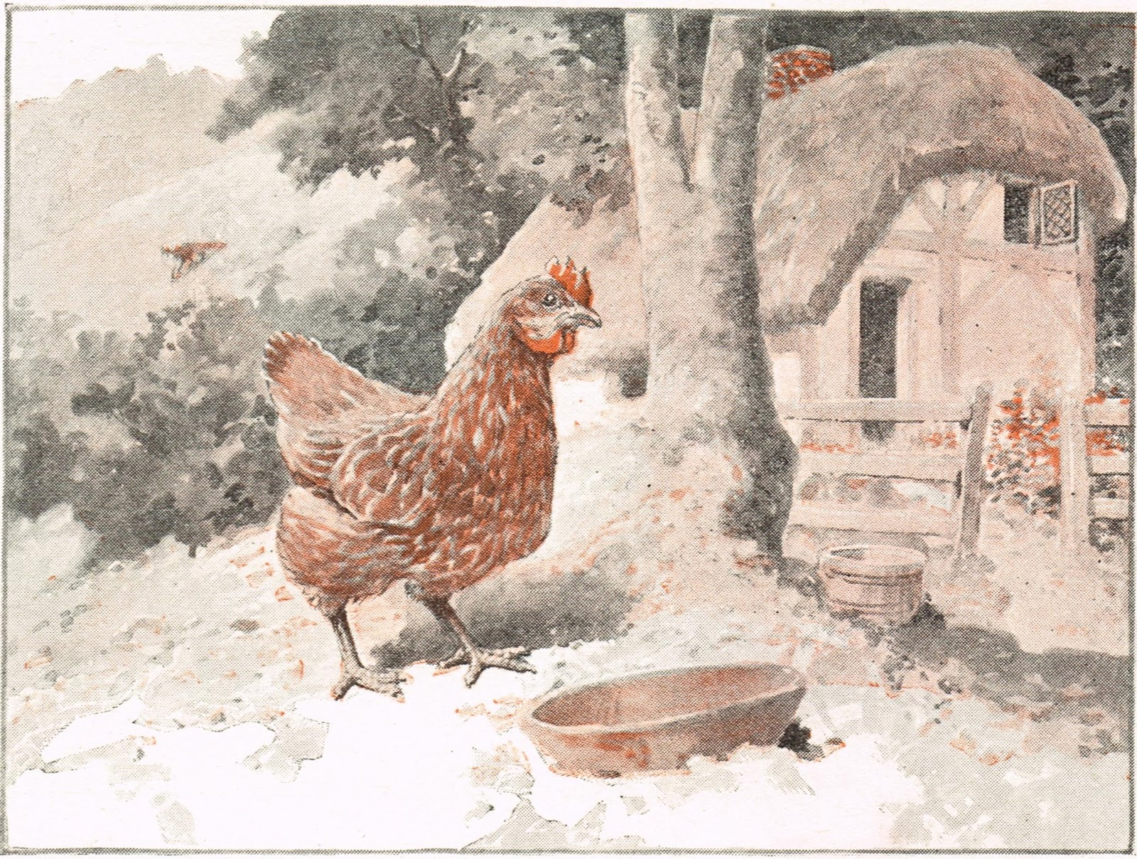 antique graphics wednesday 3 chicken images knick of time