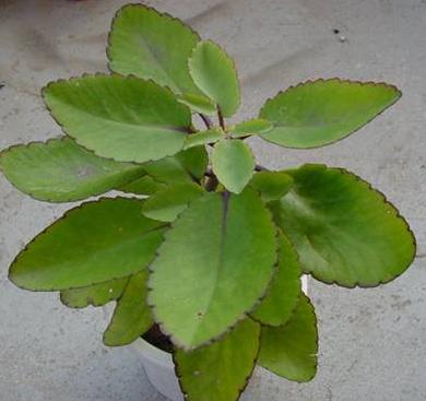 हरी हरी पत्तियों का सेवन