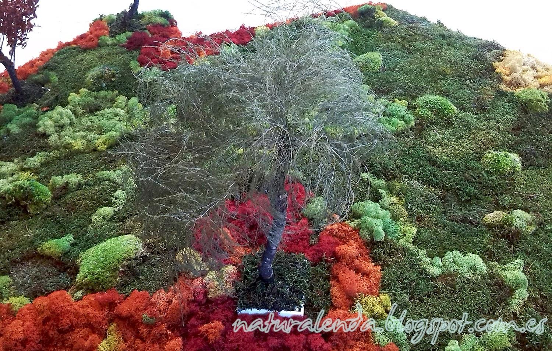 un pequeño bonsai