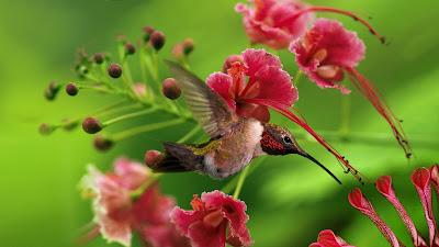 Imagenes De Flores Para Jardin - 40 ideas sobre decoración exterior en jardines con flores
