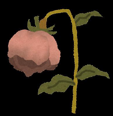 枯れた花のイラスト