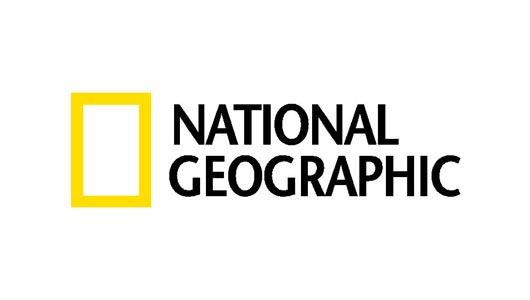 Simple Shape Logo
