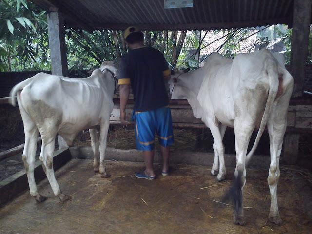 Desa Tambaharjo