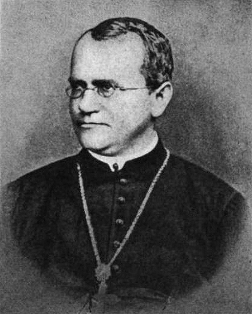 short essay on gregor mendel Our understanding of how inherited traits are passed between generations comes from principles first proposed by gregor mendel in 1866 mendel worked on pea plants, but his principles apply to traits in plants and animals – they can explain how we inherit our eye colour, hair colour and even tongue-rolling ability.