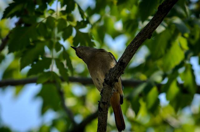 Bird Pohang South Korea