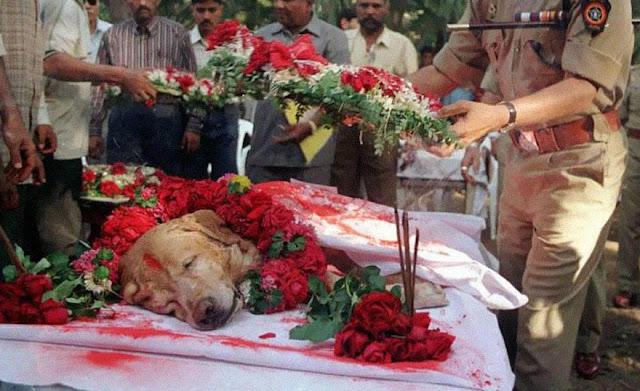 عجائب الدنيا وهل تعلم - زانجير الكلب الذي إنقاذ آلاف الأرواح خلال سلسلة تفجيرات مومباي مارس 1993