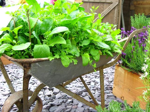 ideias para um jardim lindoWheelbarrow Herb Garden Ideas