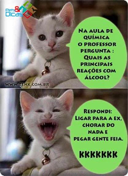 Imagens de piadas de gato para Facebook