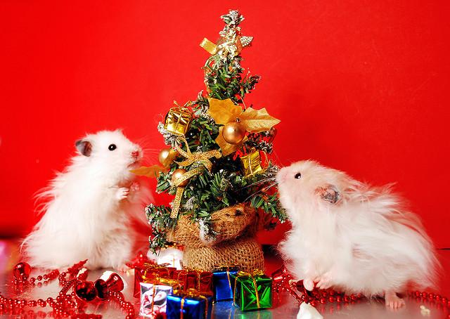 Christmas hamsters.
