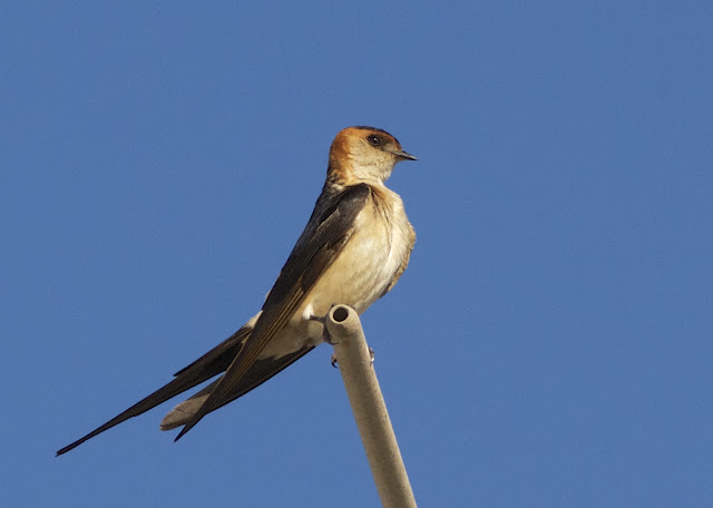 Birding, Costa Blanca, Spain