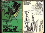 my sketches from Tanzania