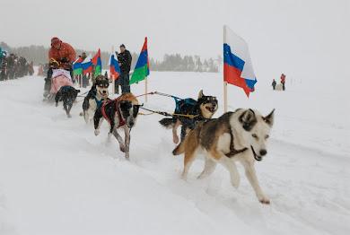 """многодневная гонка """"Калевала 2011""""- 338 км"""