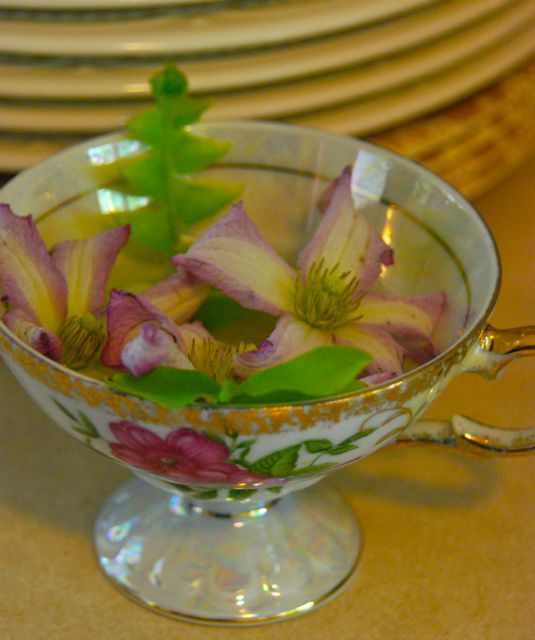 Clematis 'Lil' Nell' in a tea cup with a fern.