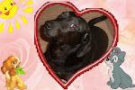 Meu cachorrinho Lindo!!!
