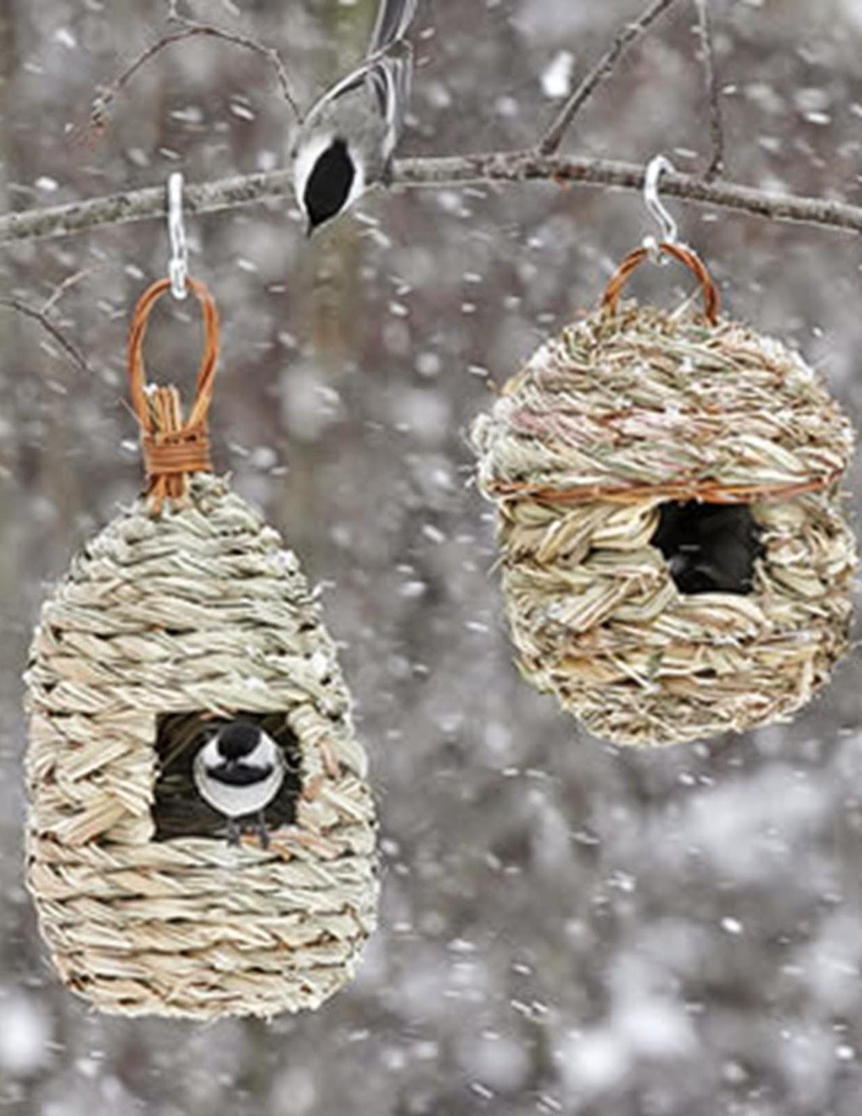 wild birds unlimited where birds shelter in the rain