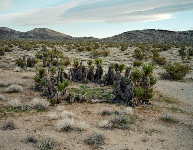 photographer Rachel Sussman oldest living things-9