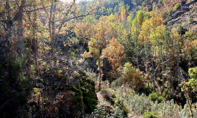 Bosques de robles, castaños y abedules en la Sierra del Rincón