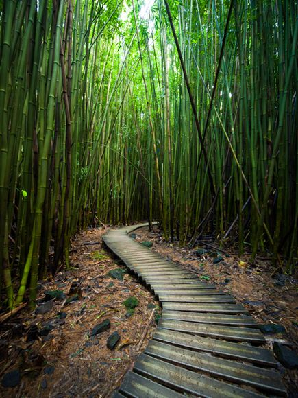 a sequence analysis the bamboo forest Forest area research on moso bamboo has isolation of culturable endophytic bacteria characteristics and diversity with a 16s rdna sequence analysis.