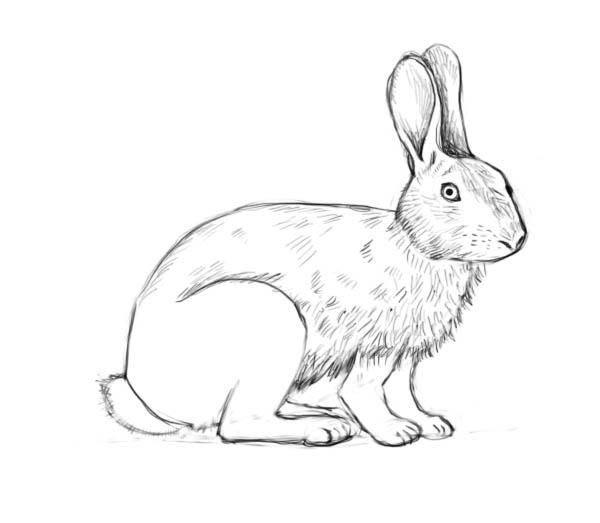 Corso di grafica e disegno per imparare a disegnare come for Coniglio disegno per bambini