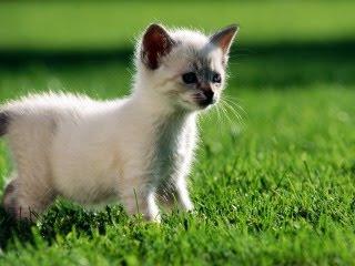 Znatiželjna mačkica download besplatne pozadine slike za mobitele