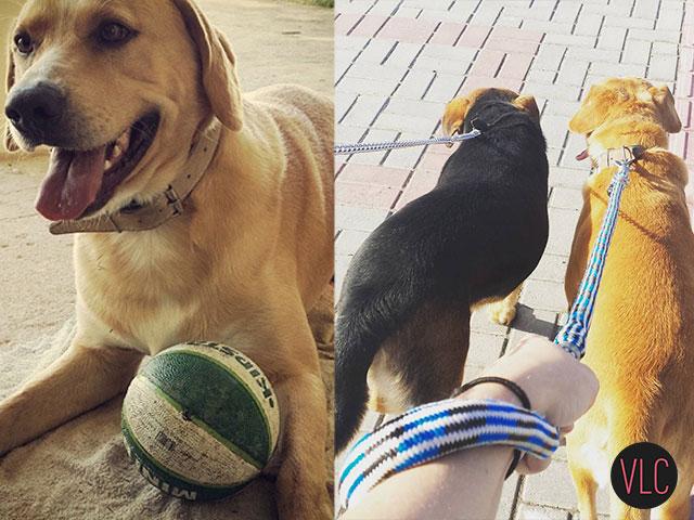 Exercicios para cachorros