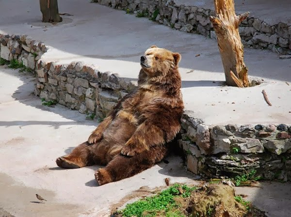 Funny animals of the week - 31 January 2014 (40 pics), bear sits like a human