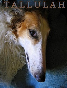 MI BORZOI