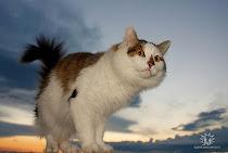 არ ვიცოდი, რომ კატას ფრენა შეეძლო