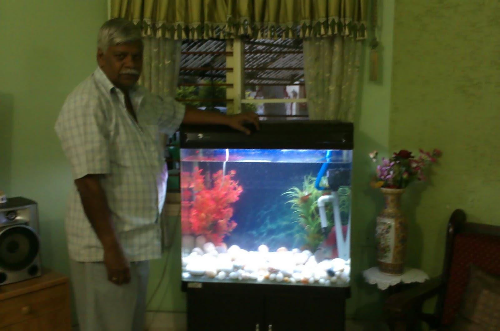 Fish for aquarium in bangalore - 2 5 Feet Flowerhorn Aquarium