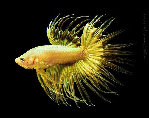 Funny Absurd Beautiful Fish