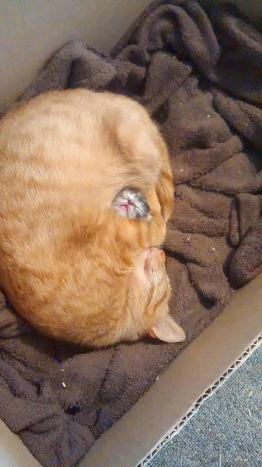Funny cats - part 106 (40 pics + 10 gifs), cat and kitten pictures, cute cats, adorable cat pictures
