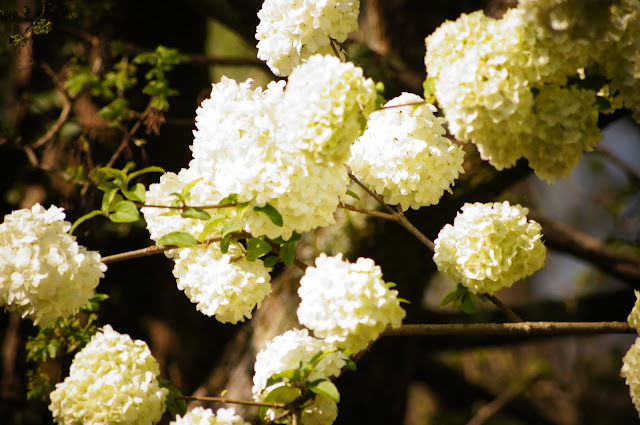 picture of beautiful white flowers